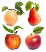 Photo-realistic vector fruits. — Stock Vector