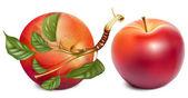 Mogna röda äpplen — Stockvektor