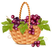 Bunch of fresh grape in the basket. — Stock Vector