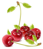 Ripe red cherries — Vector de stock