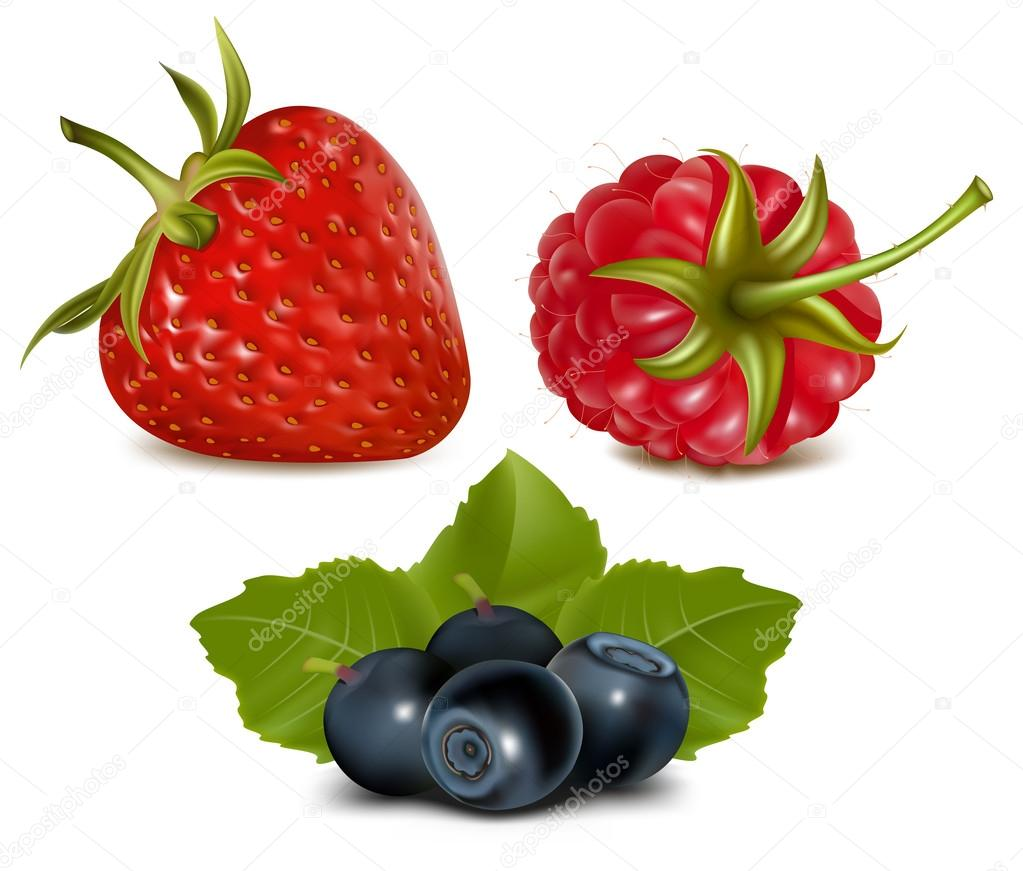 草莓, 覆盆子和蓝莓的叶子— 矢量图片作者 ivelly