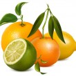 Tropical fruits with leaves — Image vectorielle