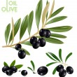 Black olives with leaves. — Stock Vector #33447331