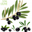 Black olives with leaves. — Stock Vector