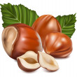 Hazelnuts with leaves. — Stock Vector