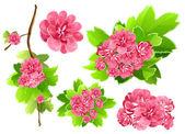 Spring flowers. — Vettoriale Stock