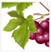 Grape cluster — Stock Vector