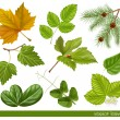 Vector collection of leaves — Stock Vector