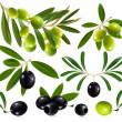 Olives with leaves — Stock Vector