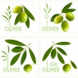 Logo. Olives. — Stock Vector
