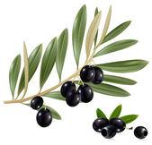 Zwarte olijven met bladeren. — Stockvector