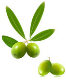 Green olives with leaves — Stock Vector