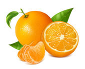 Fresh oranges fruits — Vecteur