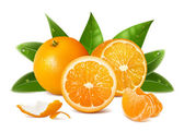 Vector fresh ripe oranges — Stock Vector