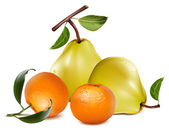Ripe pears and tangerine fruits. — Stockvector