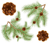 Pine cones with pine needles — Stock Vector