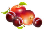 Plums and apples — Stock Vector