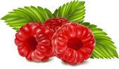 Ripe raspberries. — Stock Vector