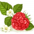 Raspberry with leaves  — Stock Vector
