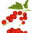 Red ripe currant — Stock Vector