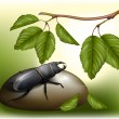 Beetle in nature  environment — Image vectorielle