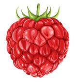Raspberry — Vector de stock