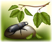 Beetle in nature environment — Stock Vector