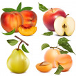 Apples, apricots peaches and pear — Stock Vector #33590073