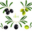 Green olives with leaves. — Stock Vector #33590081