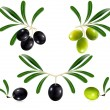 Green  and black olives — Stock Vector