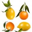 mandarinas y limones — Vector de stock  #33590403