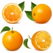 oranges with leaves. — Stock Vector