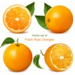 Fresh ripe oranges — Stock Vector