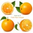 świeżych dojrzałych pomarańczy — Wektor stockowy