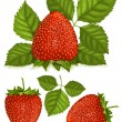 Strawberries with leaves. — Stock Vector #33590809