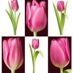 Pink Tulips — Stock Vector #33590915