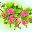 Bird on the flowering branch — Stock Vector #33592215