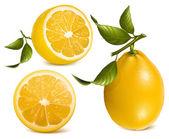 Citrons frais — Vecteur