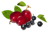 Ripe plums with black currants. — Vector de stock