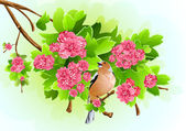 Bird on the flowering branch — Stock Vector