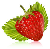 Strawberry with leaves. — Stock Vector