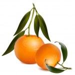 Fresh tangerine — Stock Vector #33694527