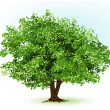 Tree. vector illustration — Vector de stock #33695289