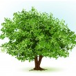 Stock vektor: Tree. vector illustration