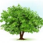 Tree. vector illustration — Stock Vector
