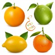 Orange, lime, tangerine  and lemon.  — Stock Vector