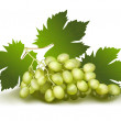 Grapes.  — Stock Vector