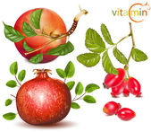 Apples, pomergranate and dog rose. — Stock Vector