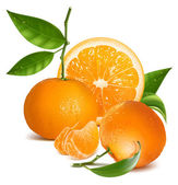 Fresh tangerines with green leaves and orange. — Stock Vector