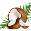 Coconuts with leaves. — Vector de stock